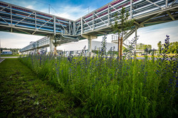 Open space designed according to biodiversity standards at the Audi site in Münchsmünster; photo: AUDI AG