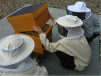 The bee group is looking after the colonies of bees on the company's premises, Photo: Umweltinitiative Eschborn