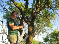 Activity at the orchard with scattered fruit trees 2015: Setting up bat boxes, Photo: Neumarkter Lammsbräu